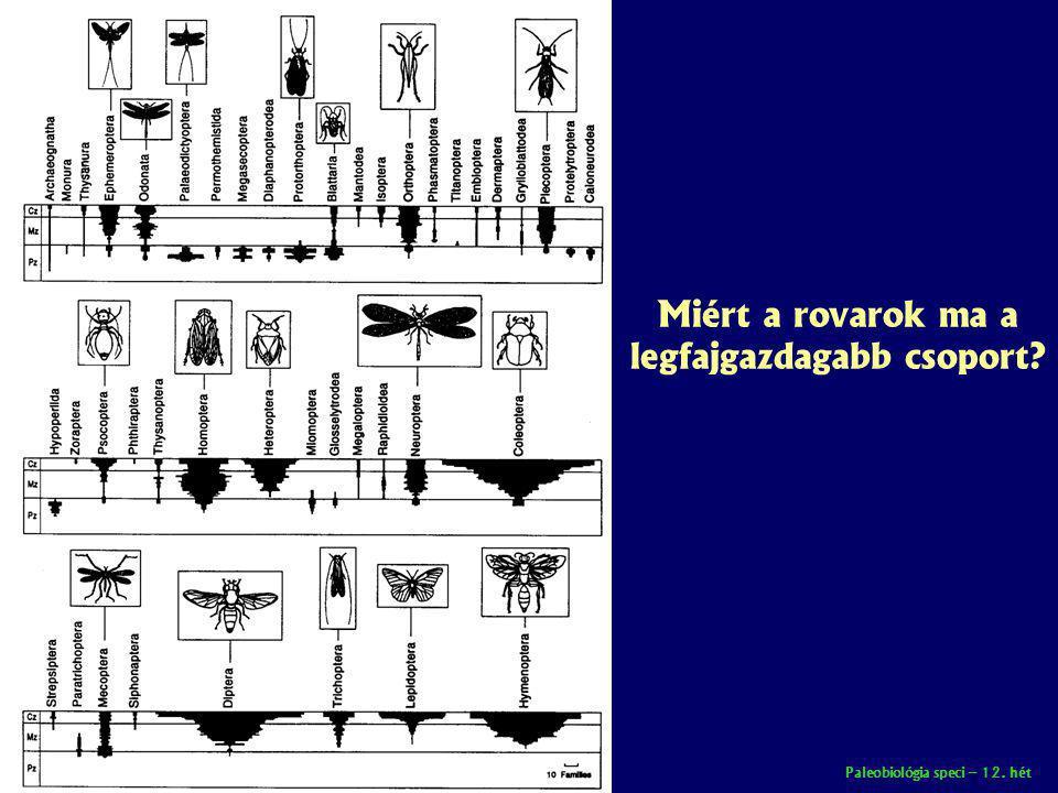 Miért a rovarok ma a legfajgazdagabb csoport