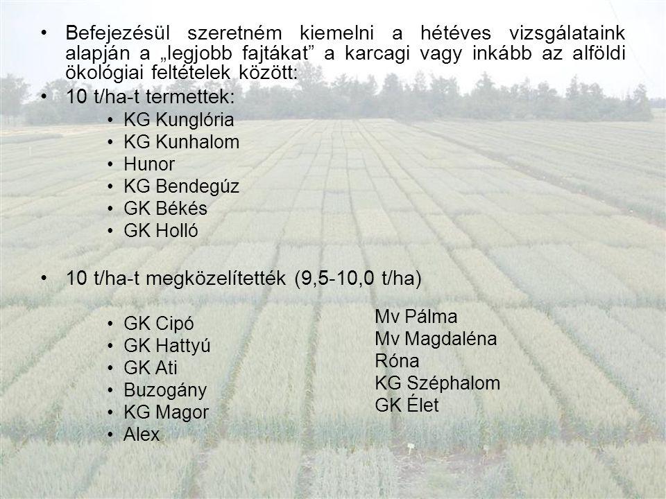 10 t/ha-t megközelítették (9,5-10,0 t/ha)
