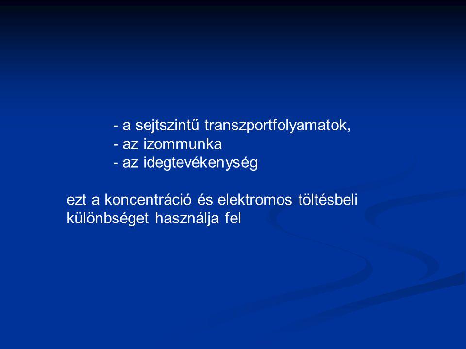 - a sejtszintű transzportfolyamatok,