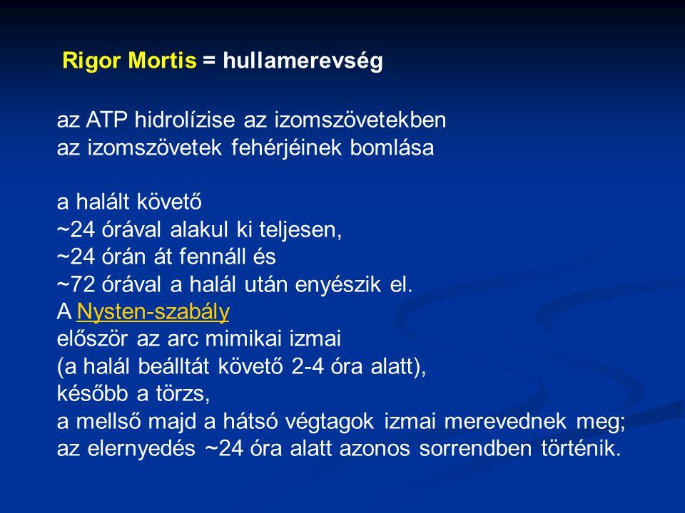 Rigor Mortis = hullamerevség