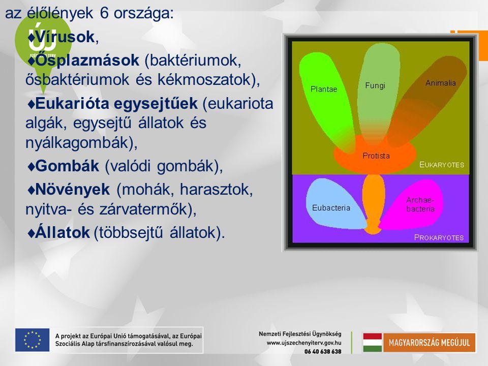 az élőlények 6 országa: Vírusok, Ősplazmások (baktériumok, ősbaktériumok és kékmoszatok),