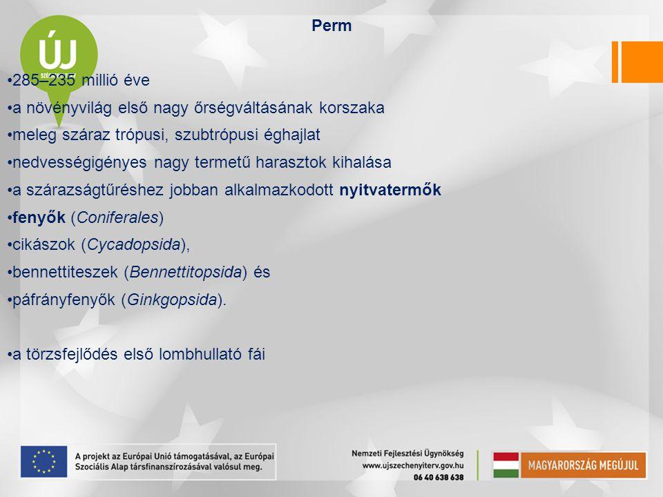 Perm 285–235 millió éve. a növényvilág első nagy őrségváltásának korszaka. meleg száraz trópusi, szubtrópusi éghajlat.