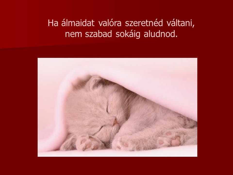 Ha álmaidat valóra szeretnéd váltani, nem szabad sokáig aludnod.