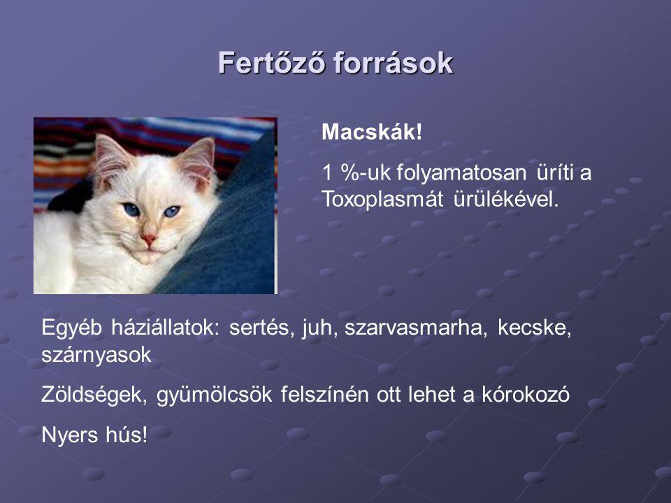 Fertőző források Macskák!