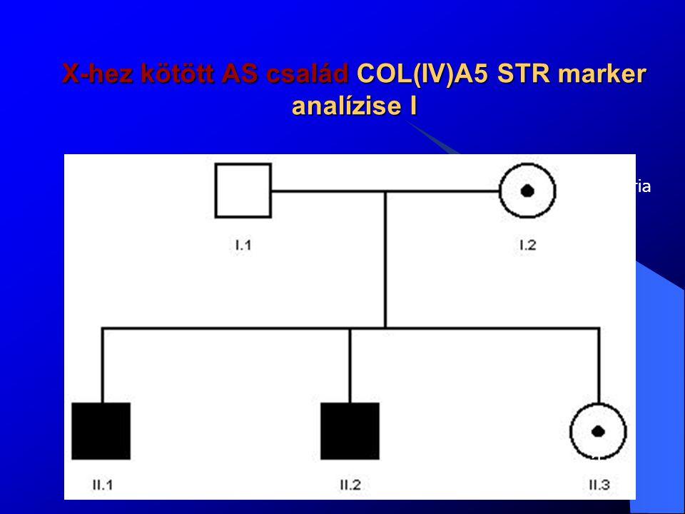 X-hez kötött AS család COL(IV)A5 STR marker analízise I