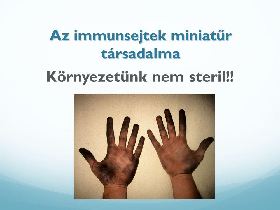 Az immunsejtek miniatűr társadalma