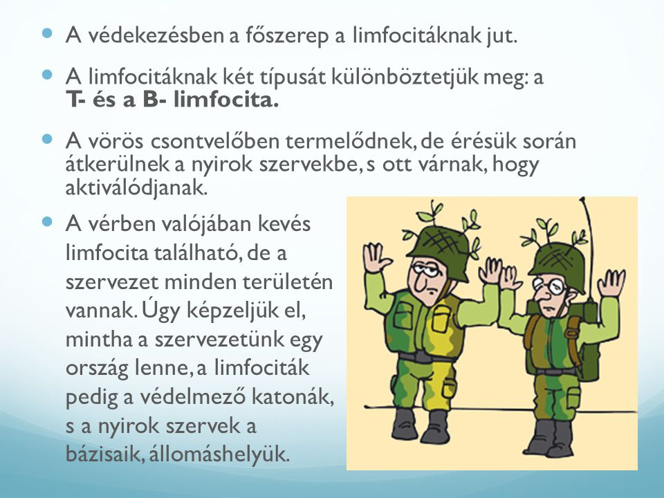 A védekezésben a főszerep a limfocitáknak jut.