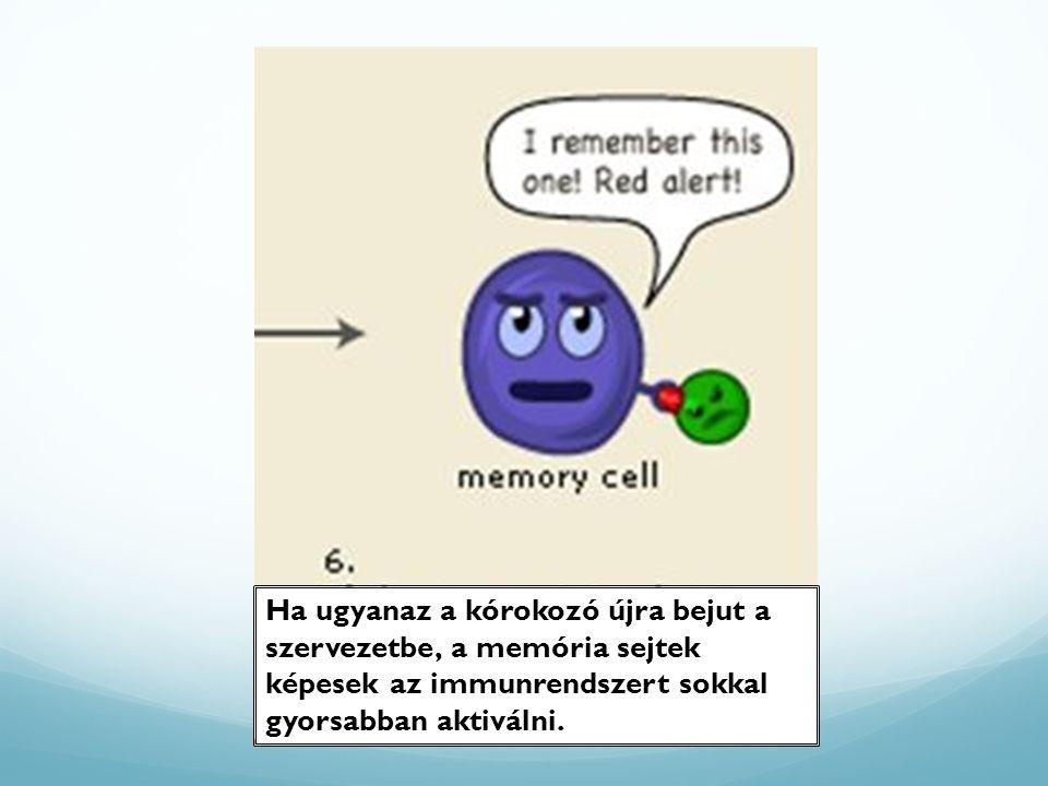 Ha ugyanaz a kórokozó újra bejut a szervezetbe, a memória sejtek képesek az immunrendszert sokkal gyorsabban aktiválni.
