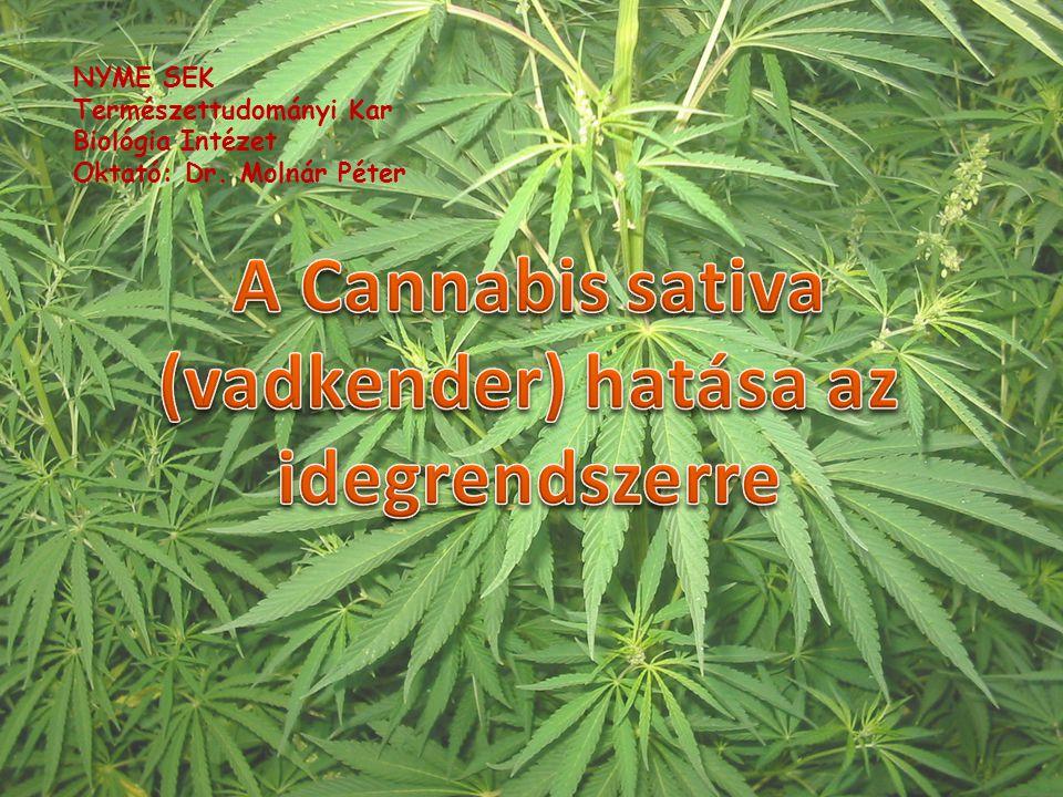 A Cannabis sativa (vadkender) hatása az idegrendszerre