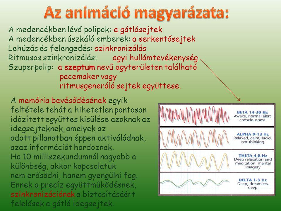 Az animáció magyarázata: