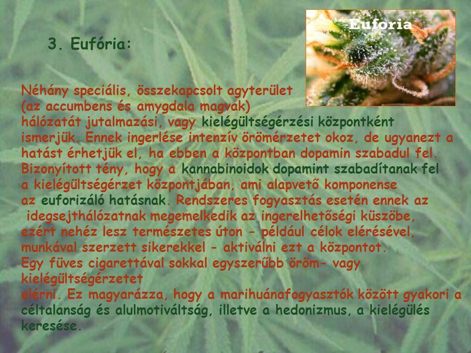 3. Eufória: Néhány speciális, összekapcsolt agyterület