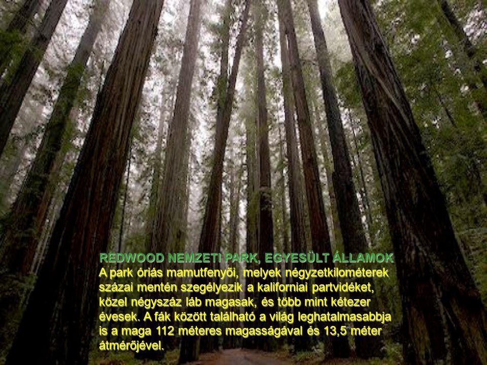 REDWOOD NEMZETI PARK, EGYESÜLT ÁLLAMOK A park óriás mamutfenyői, melyek négyzetkilométerek százai mentén szegélyezik a kaliforniai partvidéket, közel négyszáz láb magasak, és több mint kétezer évesek.