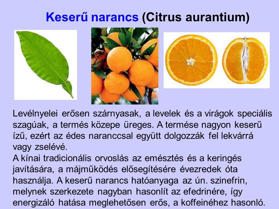 Keserű narancs (Citrus aurantium)