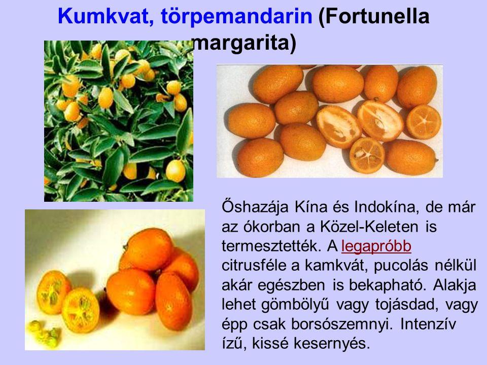 Kumkvat, törpemandarin (Fortunella margarita)