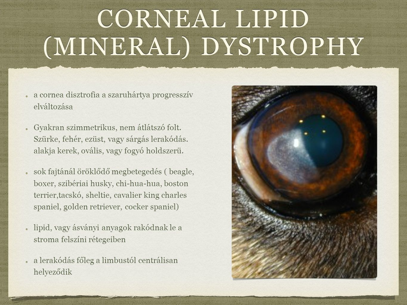 corneal lipid (mineral) dystrophy