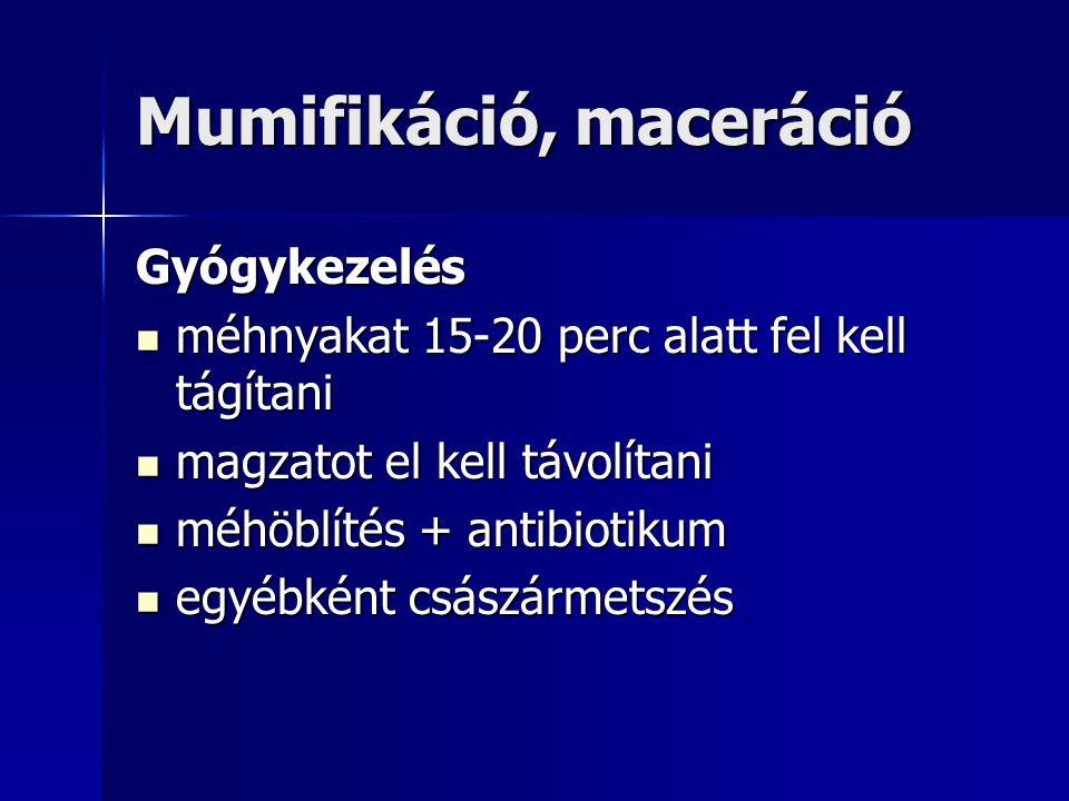 Mumifikáció, maceráció