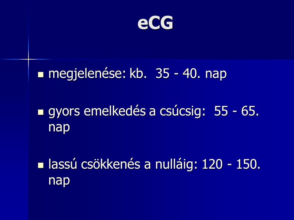 eCG megjelenése: kb. 35 - 40. nap