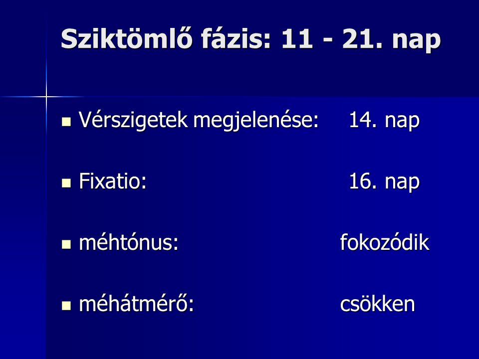 Sziktömlő fázis: 11 - 21. nap Vérszigetek megjelenése: 14. nap