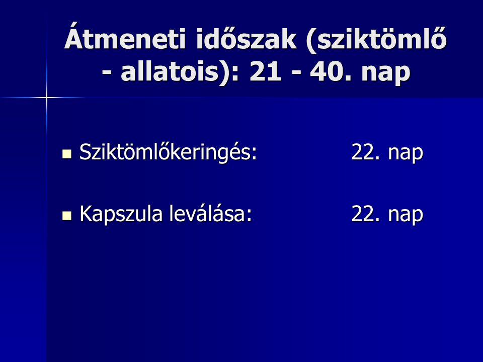 Átmeneti időszak (sziktömlő - allatois): 21 - 40. nap