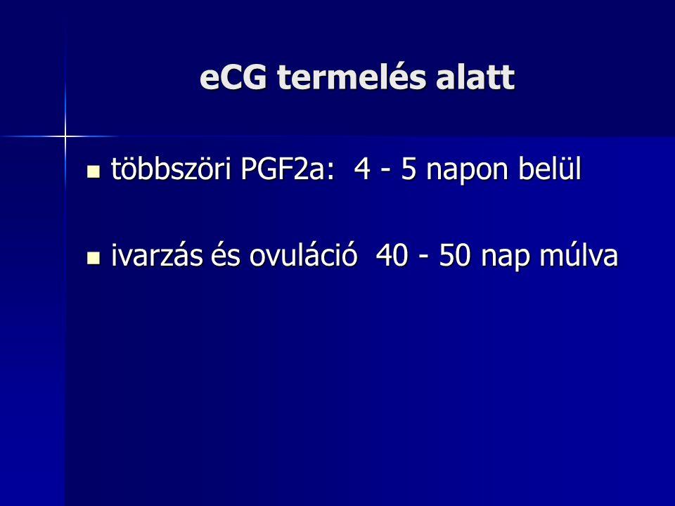 eCG termelés alatt többszöri PGF2a: 4 - 5 napon belül