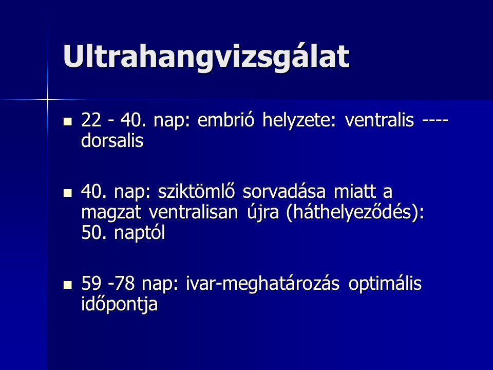 Ultrahangvizsgálat 22 - 40. nap: embrió helyzete: ventralis ---- dorsalis.