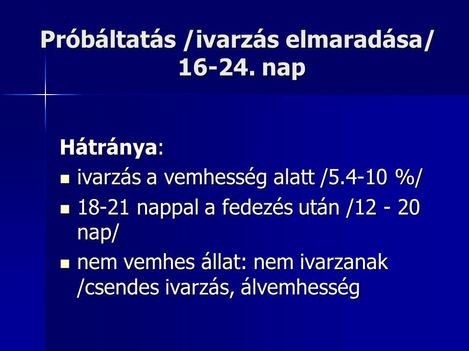 Próbáltatás /ivarzás elmaradása/ 16-24. nap