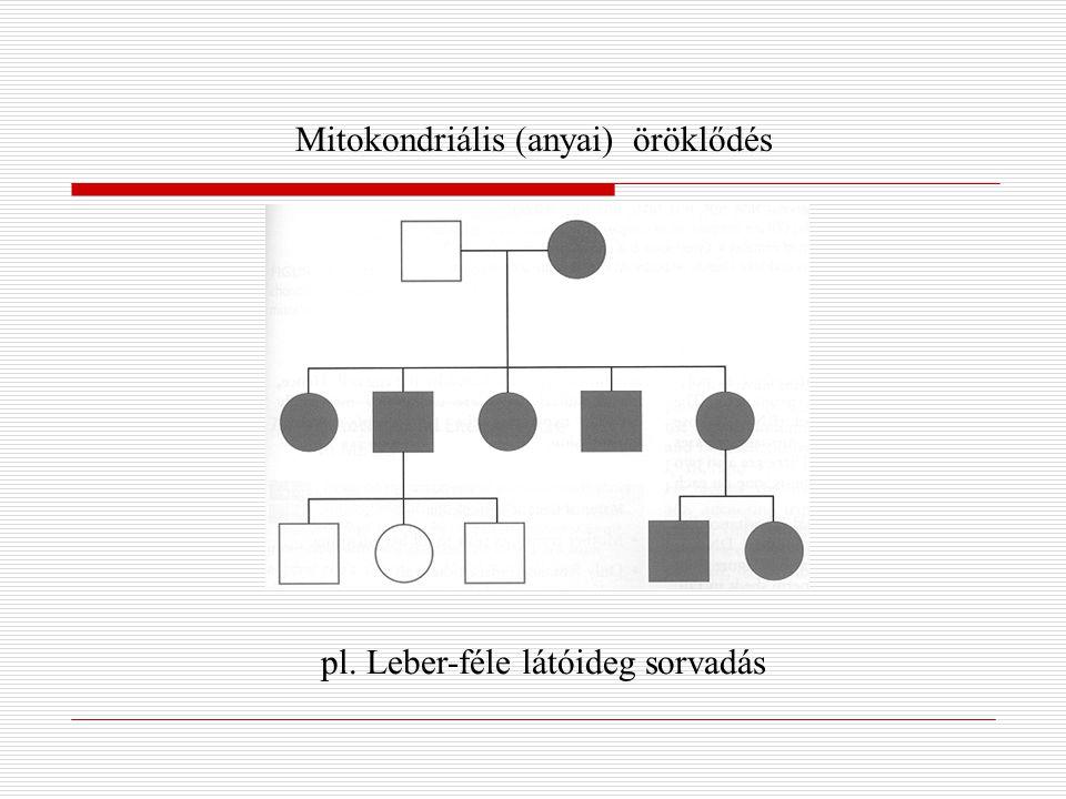Mitokondriális (anyai) öröklődés