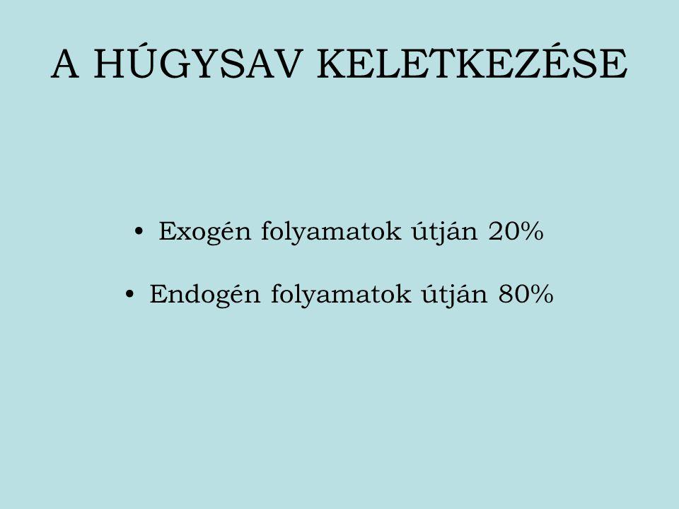 A HÚGYSAV KELETKEZÉSE Exogén folyamatok útján 20%