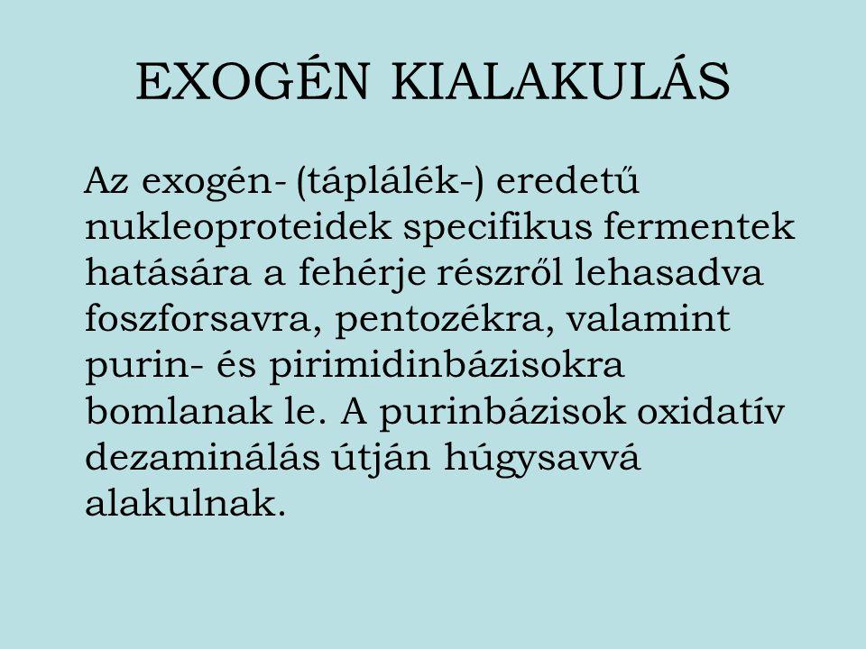 EXOGÉN KIALAKULÁS
