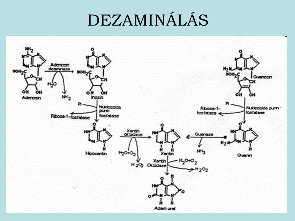 DEZAMINÁLÁS