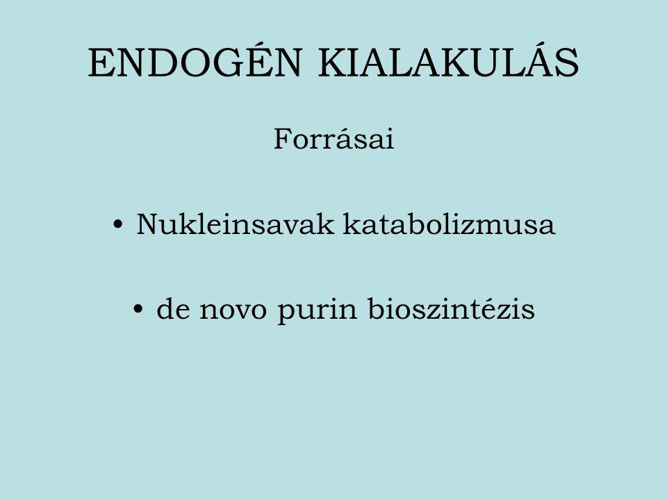 ENDOGÉN KIALAKULÁS Forrásai Nukleinsavak katabolizmusa