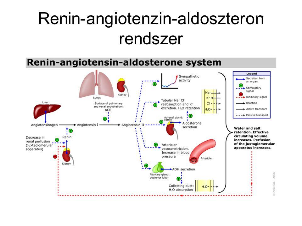 Renin-angiotenzin-aldoszteron rendszer