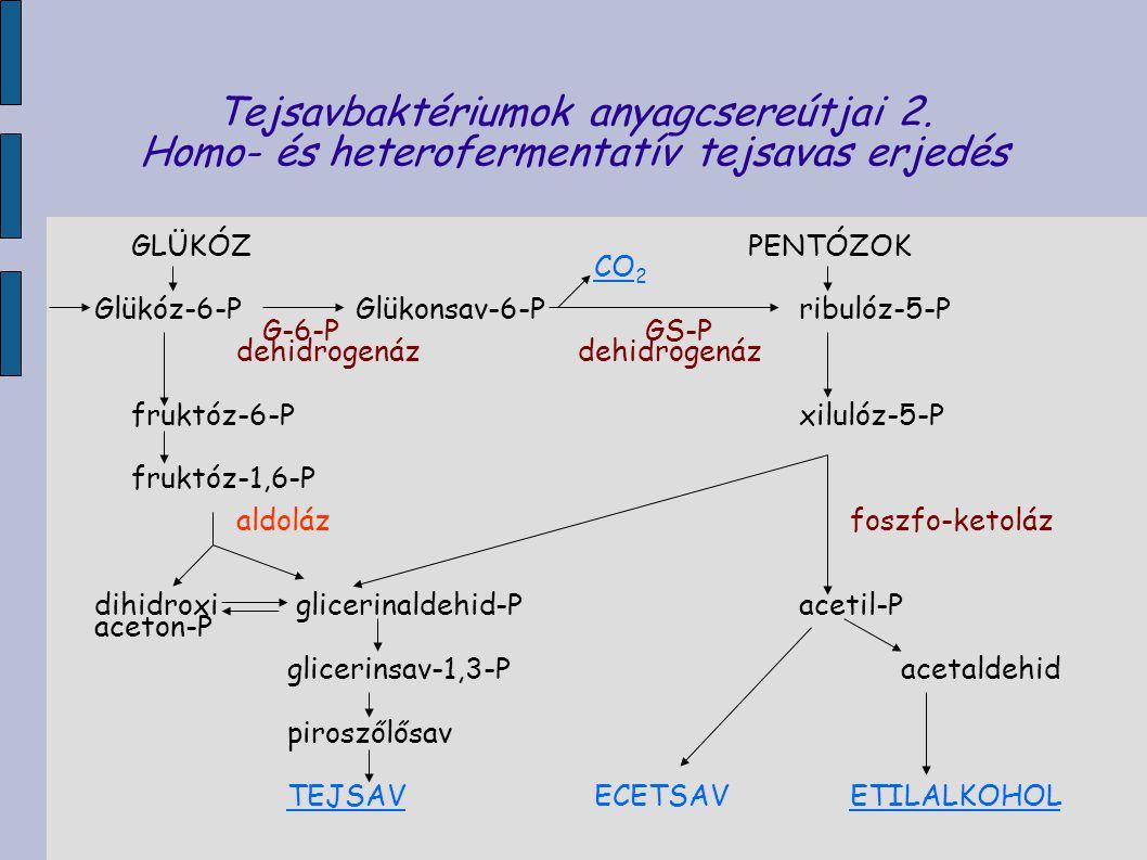 Tejsavbaktériumok anyagcsereútjai 2