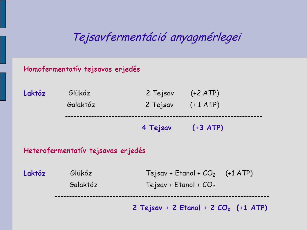 Tejsavfermentáció anyagmérlegei