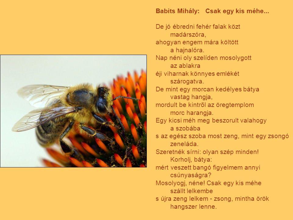 Babits Mihály: Csak egy kis méhe...