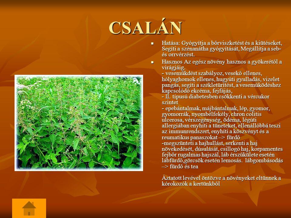 CSALÁN Hatása: Gyógyítja a bőrviszketést és a kiütéseket, Segíti a szénanátha gyógyítását, Megállítja a seb- és orrvérzést.
