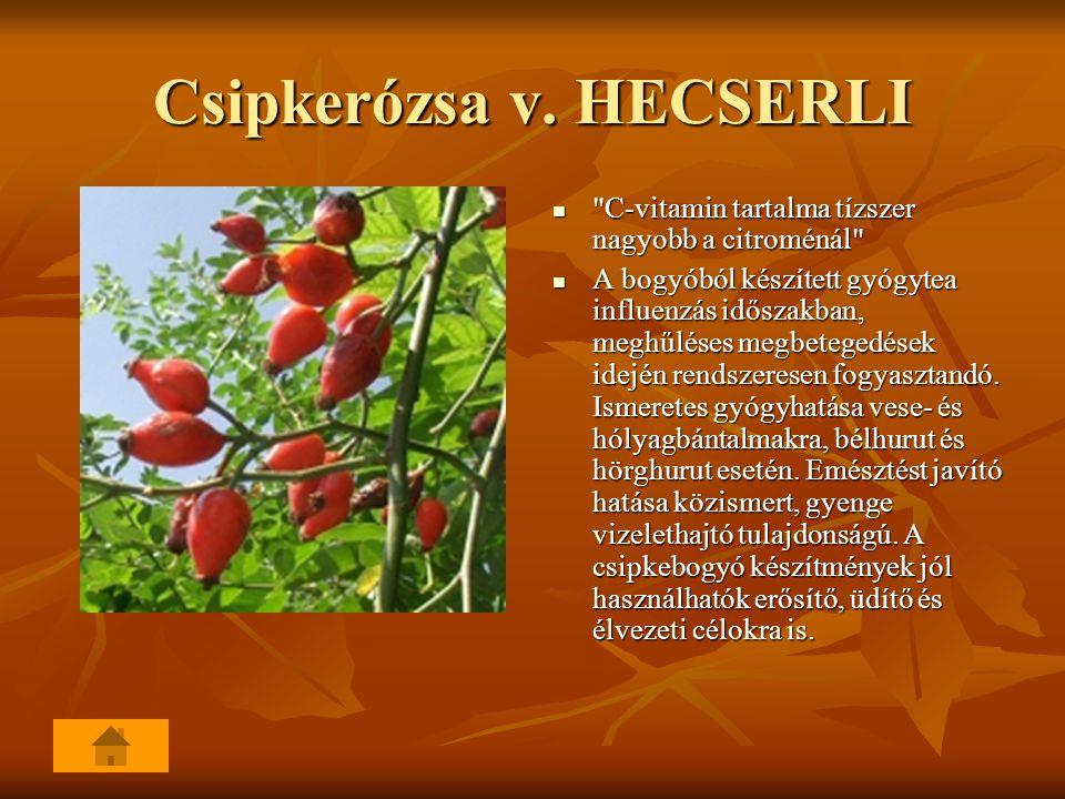 Csipkerózsa v. HECSERLI