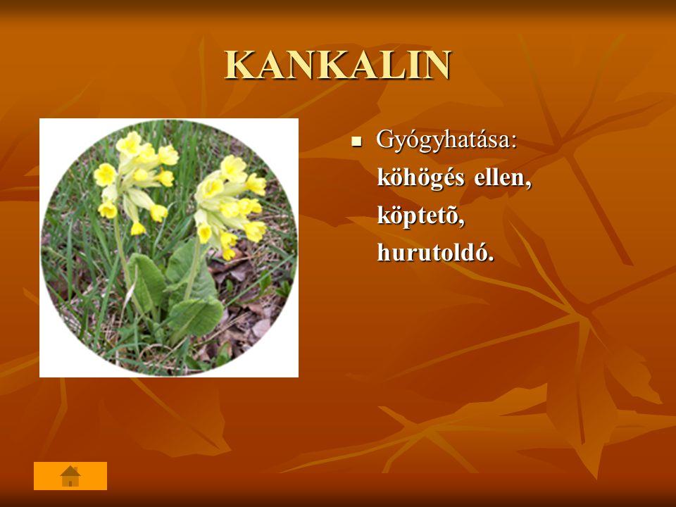 KANKALIN Gyógyhatása: köhögés ellen, köptetõ, hurutoldó.