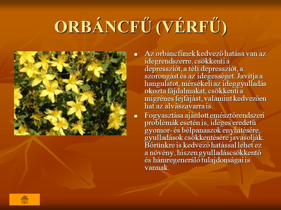 ORBÁNCFŰ (VÉRFŰ)