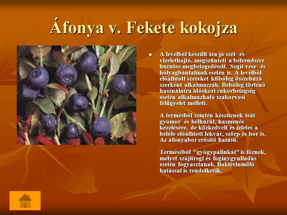 Áfonya v. Fekete kokojza