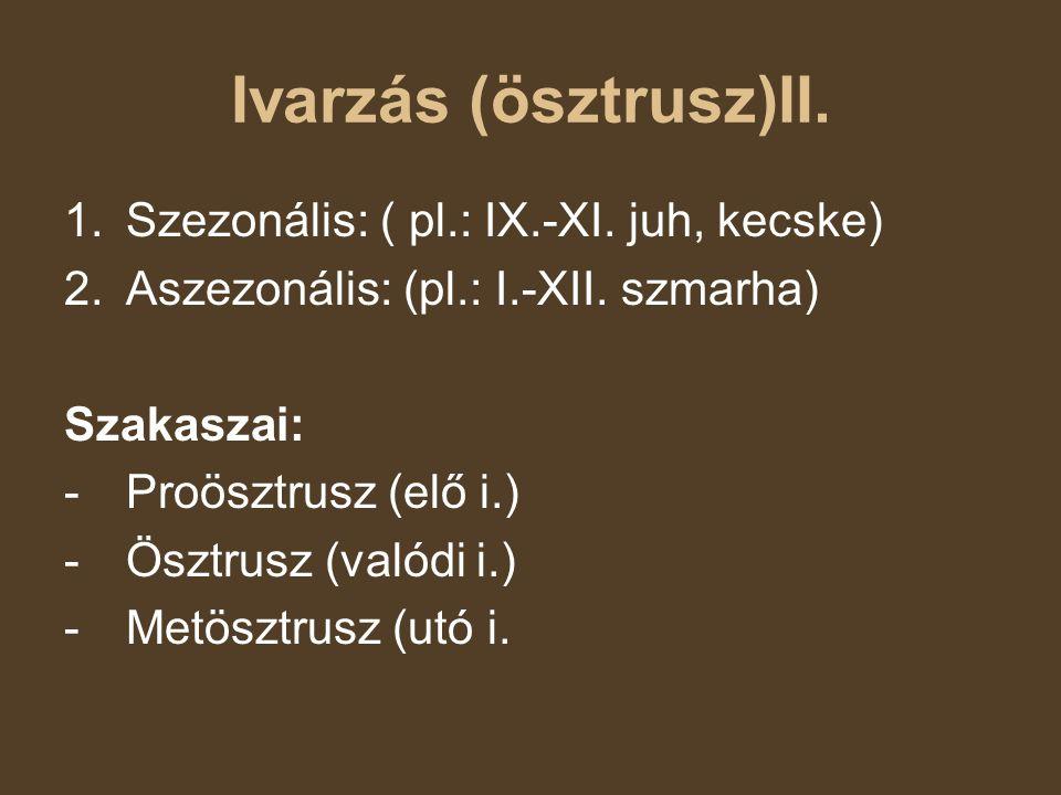 Ivarzás (ösztrusz)II. Szezonális: ( pl.: IX.-XI. juh, kecske)