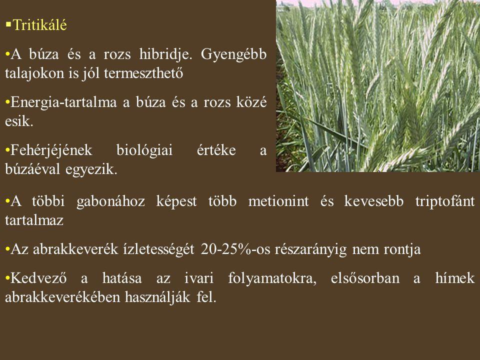 Tritikálé A búza és a rozs hibridje. Gyengébb talajokon is jól termeszthető. Energia-tartalma a búza és a rozs közé esik.