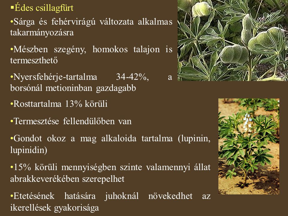 Édes csillagfürt Sárga és fehérvirágú változata alkalmas takarmányozásra. Mészben szegény, homokos talajon is termeszthető.