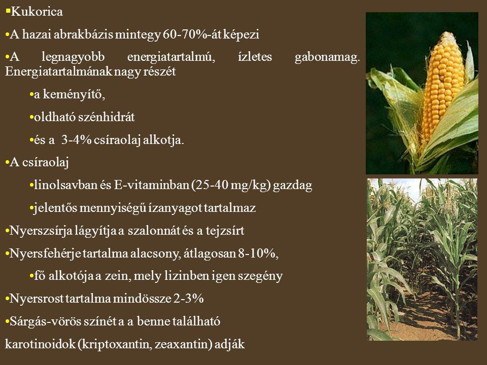 Kukorica A hazai abrakbázis mintegy 60-70%-át képezi. A legnagyobb energiatartalmú, ízletes gabonamag. Energiatartalmának nagy részét.