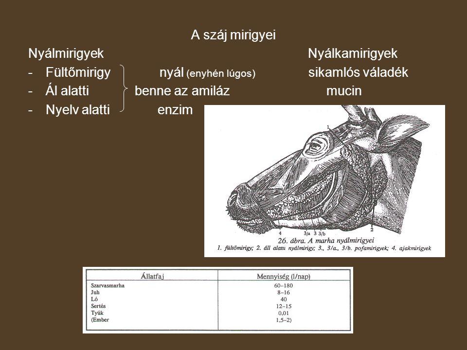 A száj mirigyei Nyálmirigyek Nyálkamirigyek. Fültőmirigy nyál (enyhén lúgos) sikamlós váladék.