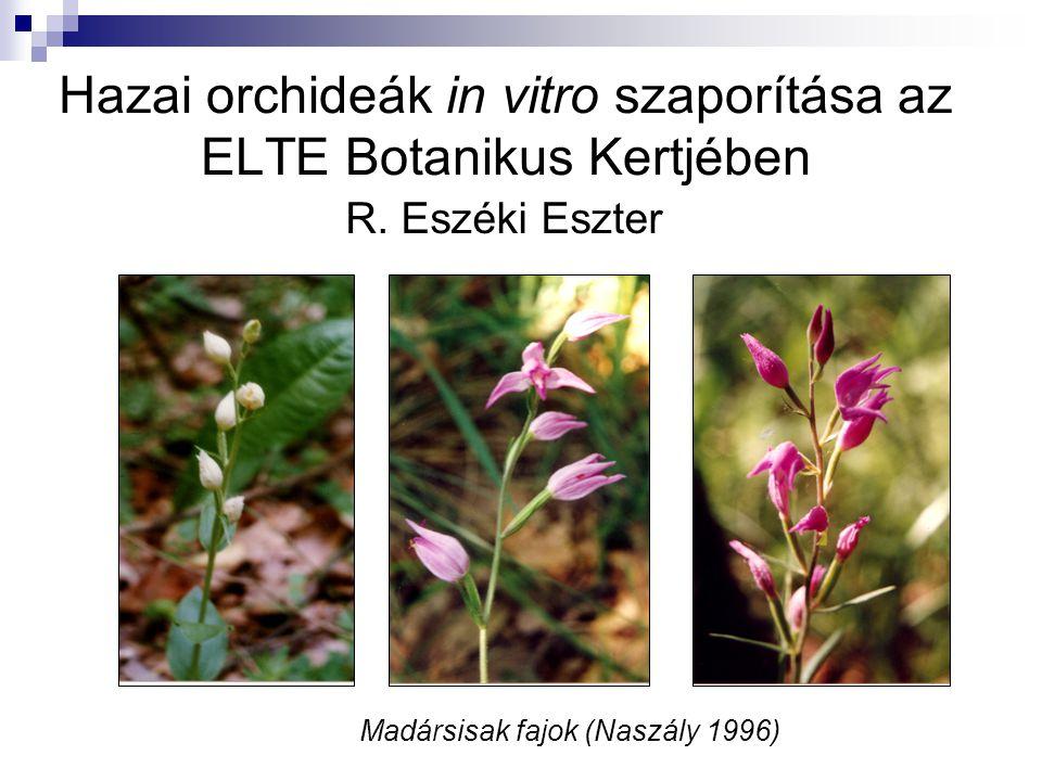 Hazai orchideák in vitro szaporítása az ELTE Botanikus Kertjében