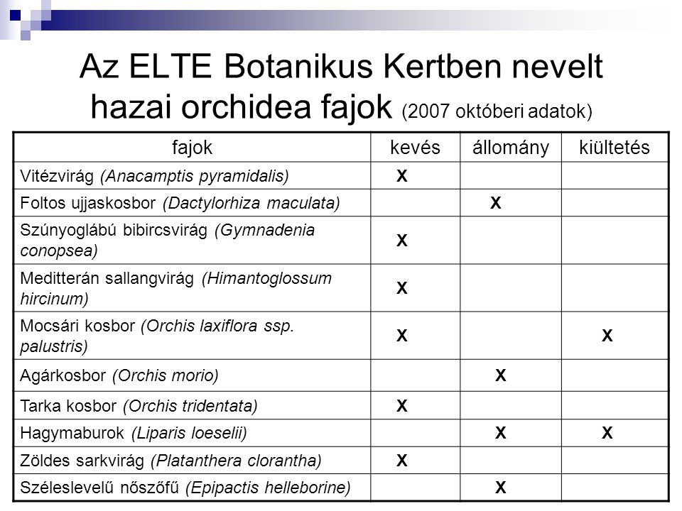 Az ELTE Botanikus Kertben nevelt hazai orchidea fajok (2007 októberi adatok)