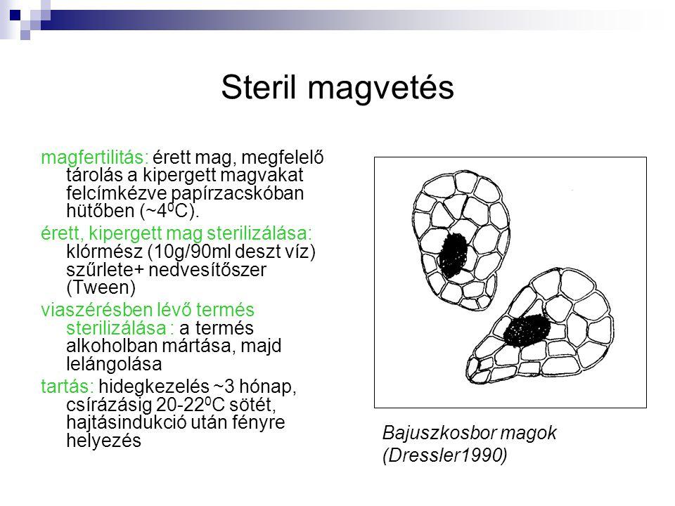 Steril magvetés magfertilitás: érett mag, megfelelő tárolás a kipergett magvakat felcímkézve papírzacskóban hütőben (~40C).