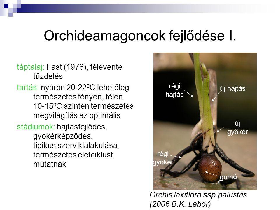 Orchideamagoncok fejlődése I.