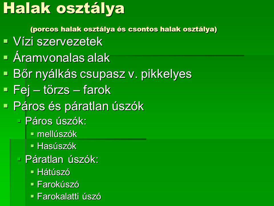 Halak osztálya (porcos halak osztálya és csontos halak osztálya)